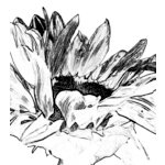 Donna Salazar - Grandma's Garden Collection - Cling Mounted Rubber Stamp - Sunflower, CLEARANCE