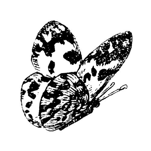 Stampers Anonymous - Donna Salazar - Cling Mounted Rubber Stamp Set - Butterfly