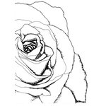 Stamper's Anonymous - Donna Salazar - Cling Mounted Rubber Stamp Set - Drawn Rose Corner