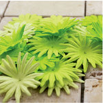 Prima - E Line - Confetti Cake Collection - Flower Embellishments - Lime Green