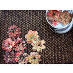 Prima - Artistry Flowers Collection - Flower Mini Tin - Mums