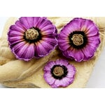 Prima - Parlor Petals Collection - Flower Embellishments - Violet