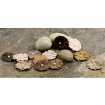 Prima - Pearl Penache Collection - Mulberry Flower Embellishments - Stone Mason, CLEARANCE