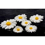 Prima - Innoscence Collection - Flower Embellishments - Mix 38, CLEARANCE