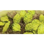 Prima - Mulberry Rose Leaves - Light Green