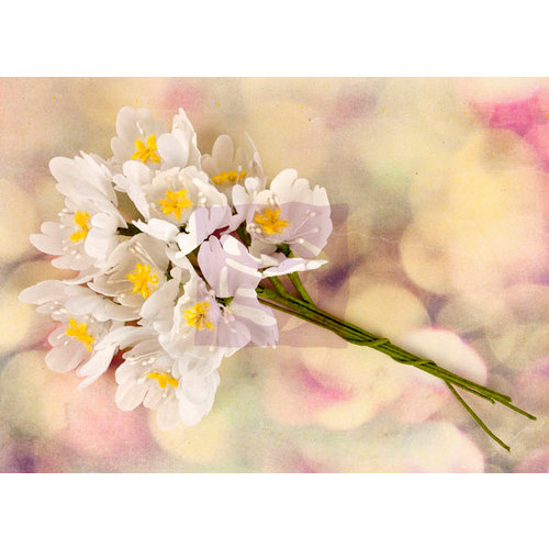 Prima - Hello Pastel Collection - Flower Embellishments - White