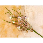 Prima - Engraver Collection - Flower Embellishments - Solid Flower Vine - Natural
