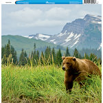 Reminisce - Customs Collection - 12 x 12 Single Sided Paper - Alaskan Bear
