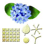 Spellbinders - Shapeabilities Collection - D-Lites Die - Hydrangea