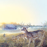 SugarTree - 12 x 12 Paper - Fall Prairie Deer