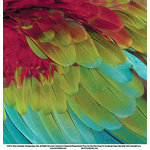 SugarTree - 12 x 12 Paper - Parrott Feathers