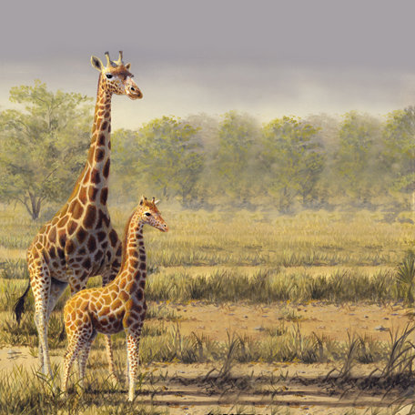 SugarTree - 12 x 12 Paper - Giraffes II