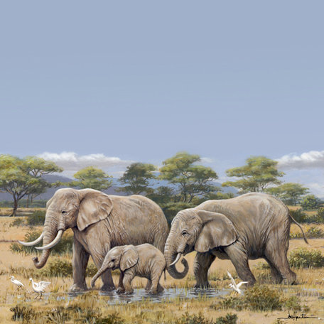 SugarTree - 12 x 12 Paper - Elephants II