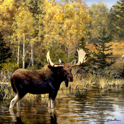 SugarTree - 12 x 12 Paper - Moose Pond