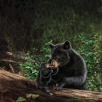 SugarTree - 12 x 12 Paper - Black Bear and Cub II