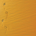 SugarTree - 12 x 12 Paper - Footprints in Sand