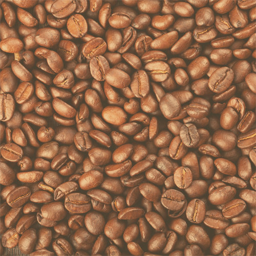 SugarTree - 12 x 12 Paper - Coffee Beans