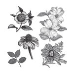 Sizzix - Hampton Art - Framelits Die and Repositionable Rubber Stamp Set - Botanical
