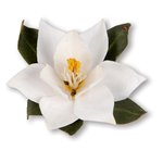 Sizzix - Susan's Garden Collection - Thinlits Die - Flower, Southern Magnolia