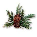 Sizzix - Susan's Garden Collection - Thinlits Die - White Pine Pinecones